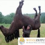 Pferdewitze