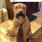 Business Hund