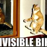 Katze unsichtbares Fahrrad