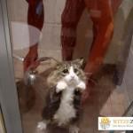 Katze Dusche