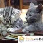 Katzendinner
